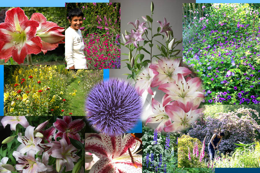 Krishna's flower collection